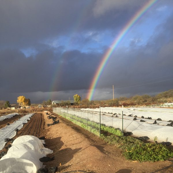 IMG_0060_rainbowoverfarm