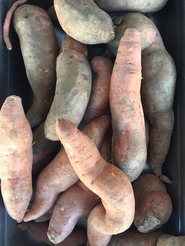 img_0949_sweetpotatoes-copy
