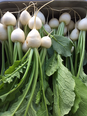 turnips-copy